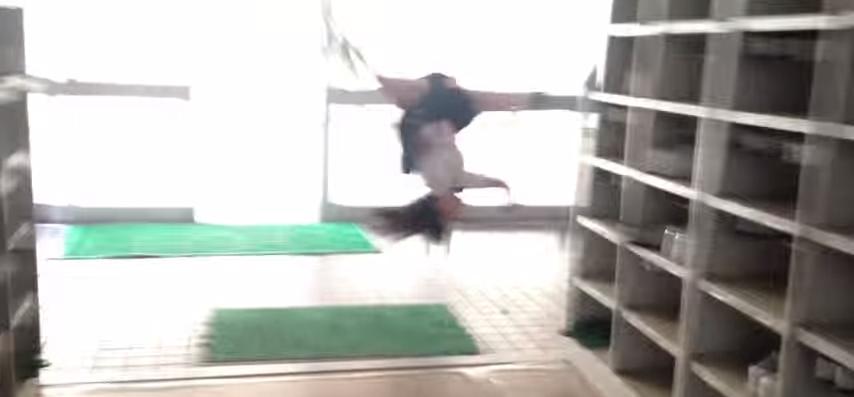 日本忍者青春高校女跳樓嬉鬧?!又一部日本無厘頭廣告